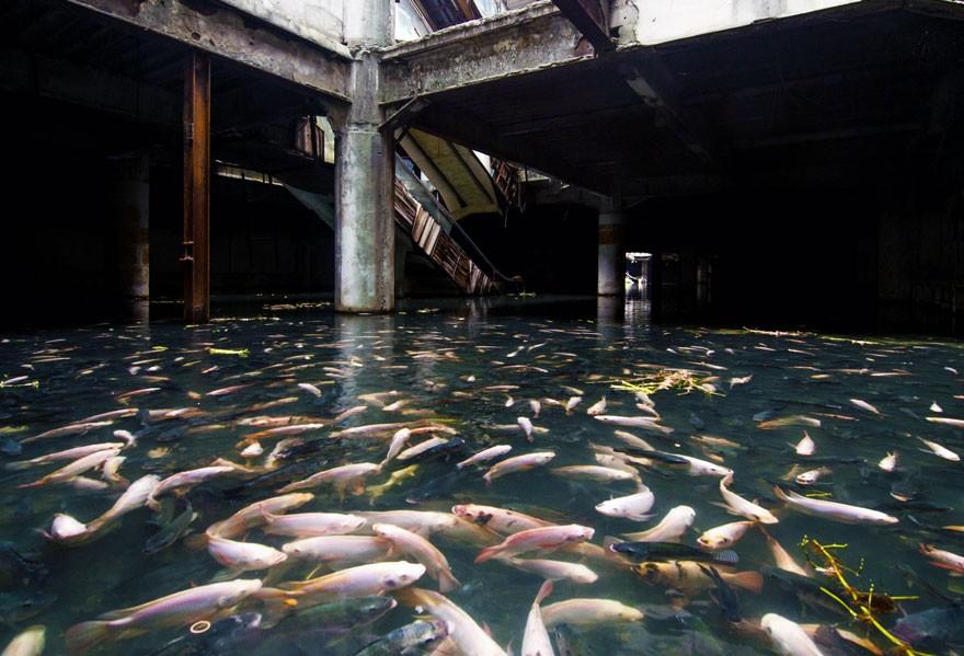 Galería comercial abandonada Bangkok