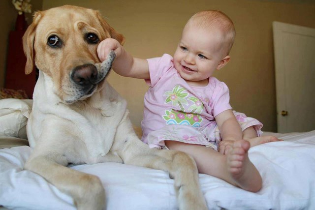 Dog-not-sure-about-this-baby-thing-934x