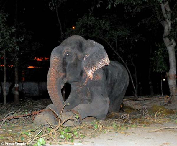 abused-elephant3