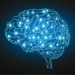 7 falsos mitos sobre el cerebro que todo el mundo toma como ciertos