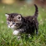 Este gatito discapacitado consiguió aprender a caminar. El vídeo más hermoso que verás hoy