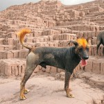 14 lugares abandonados por nosotros que han sido tomados por los animales