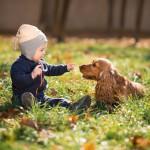 Mira cómo este perro pide disculpas al bebé después de robarle su juguete ¡Es adorable!