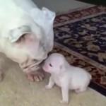 Es imposible no sonreír viendo a este adorable cachorro contestar a su mamá
