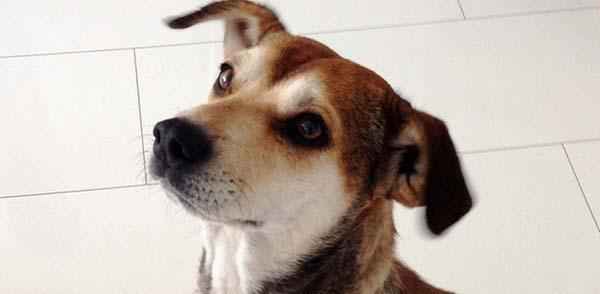 rescue-dogs10