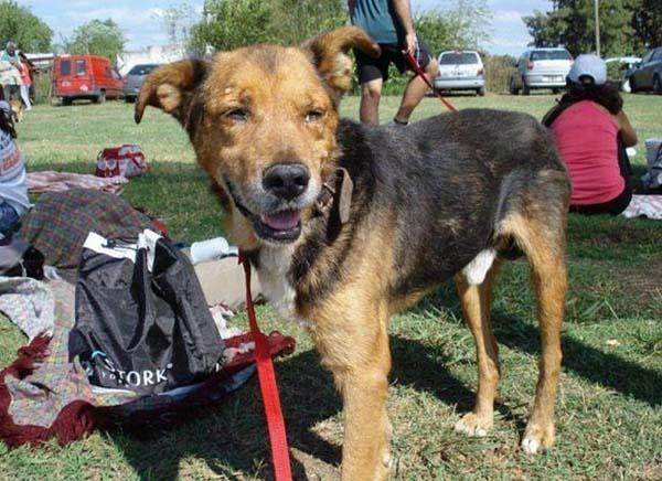 rescue-dogs16
