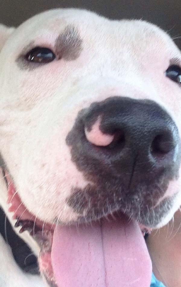 rescue-dogs18