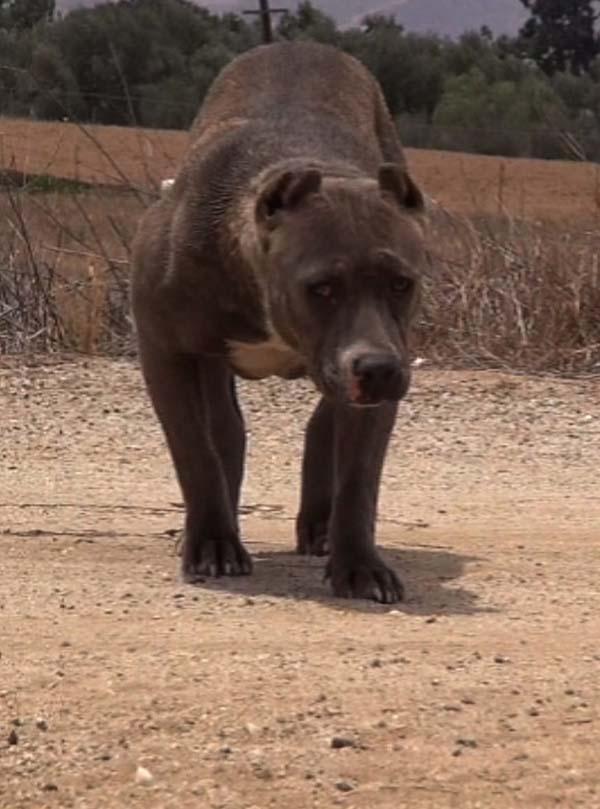 rescue-dogs19