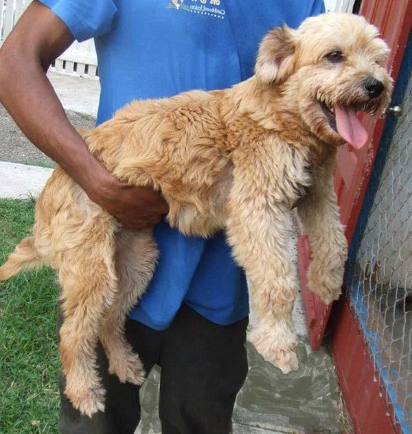 rescue-dogs2