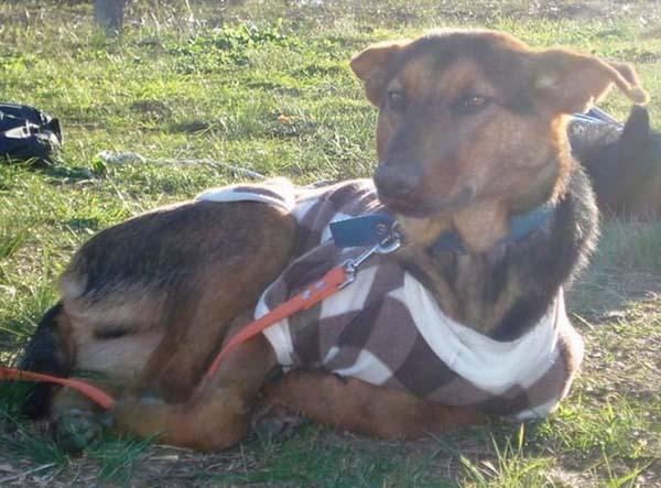 rescue-dogs28