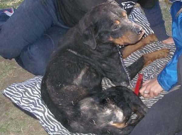rescue-dogs31