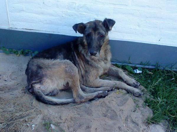 rescue-dogs33
