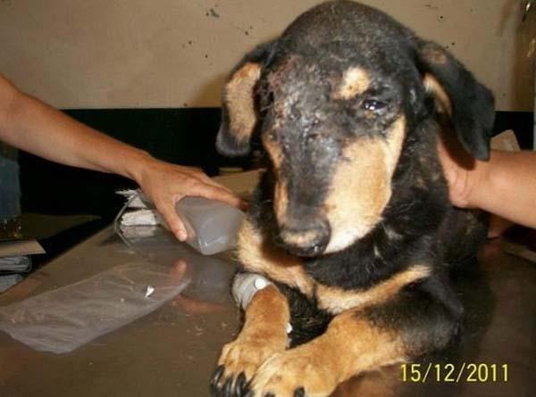 rescue-dogs34
