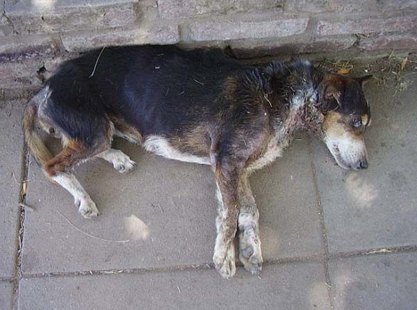 rescue-dogs42