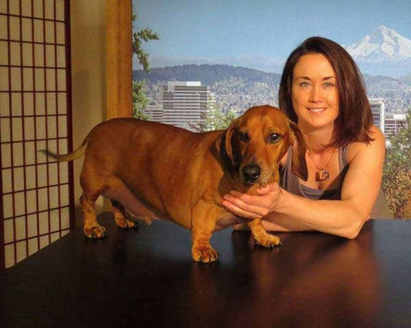 rescue-dogs45