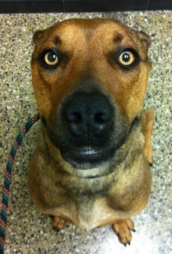 rescue-dogs47