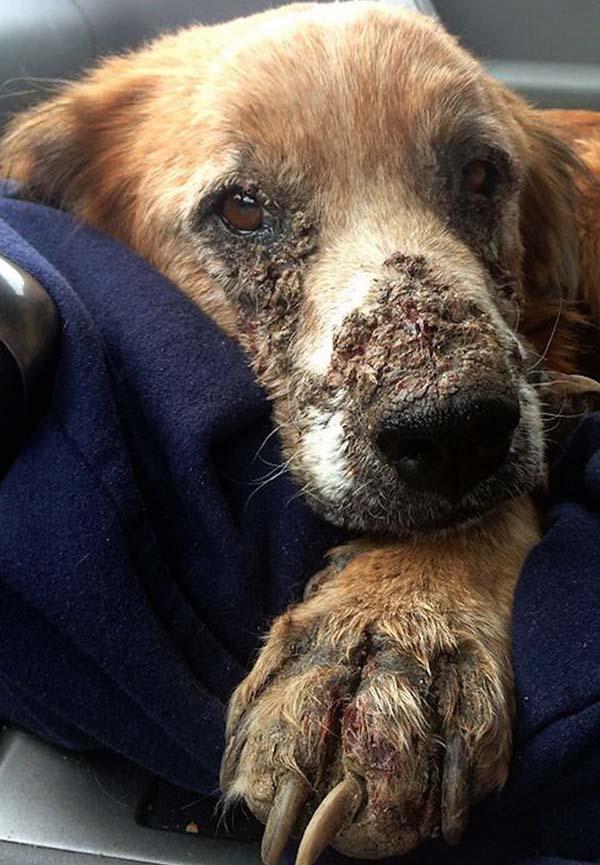 rescue-dogs48