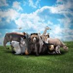 11 animales compartiendo un momento especial con los visitantes del Zoológico ¡No te lo pierdas!