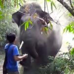 Este imprudente turista está delante de un elefante. La reacción del animal me dejó sin palabras
