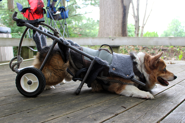 The middle bar acts as a kickstand and keeps Bentley from rolling away when resting