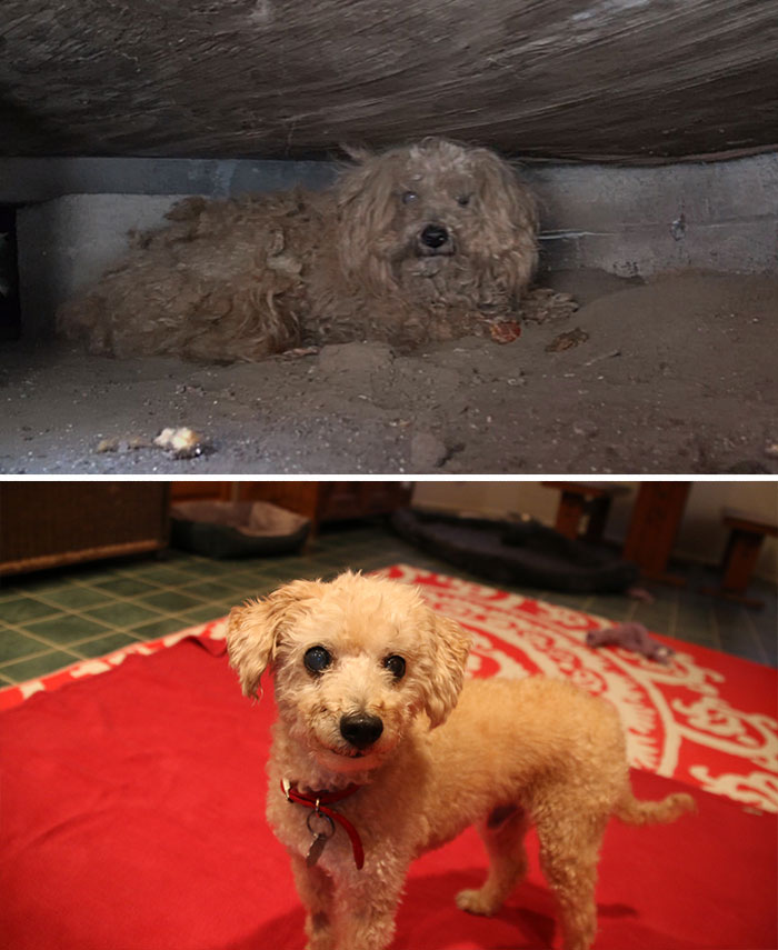 dog-makeover-before-after-rescue-39