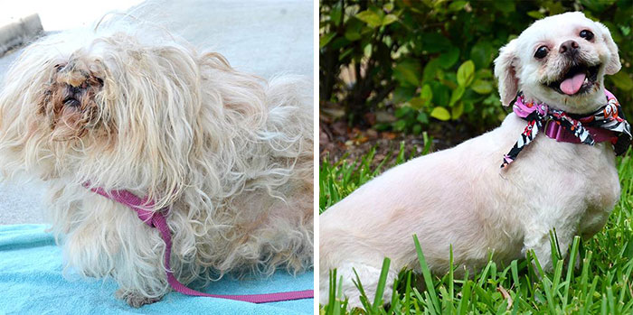 dog-makeover-before-after-rescue-7