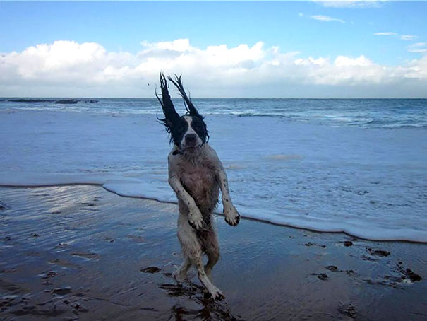 pefectly-timed-dog-photos-23 (1)