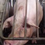 Razones por las que deberías dejar de comer tanta carne